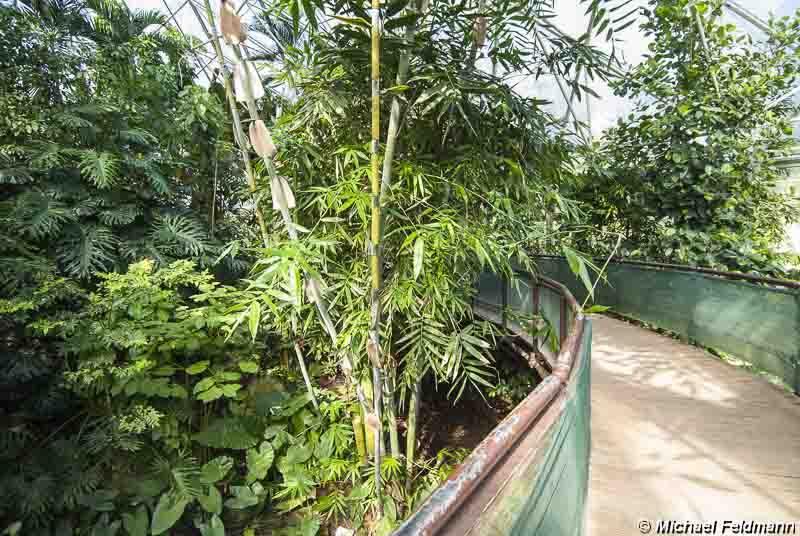 Botanischer Garten Im Grugapark Essen